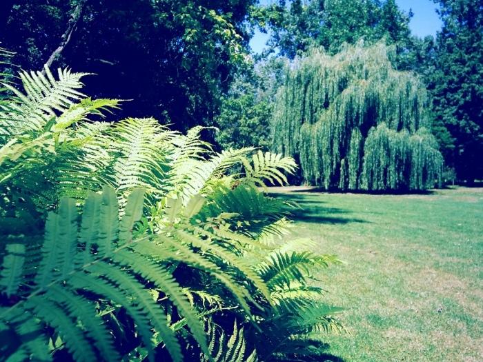 Rheinaue Blick auf Bäume und Pflanzen